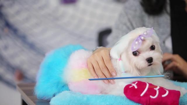 寵物生育問題