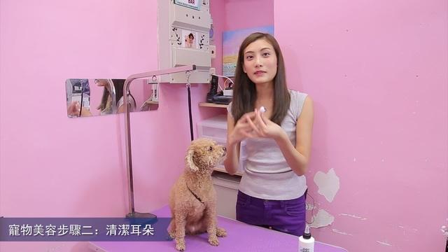 寵物美容之清潔耳朵 2